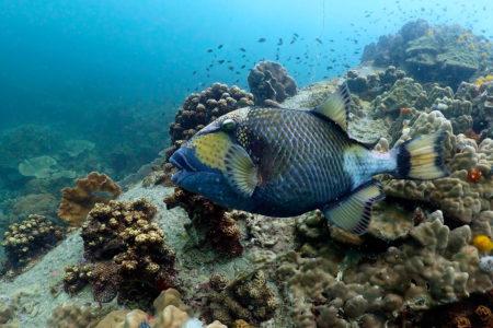 Photo Scuba Diving
